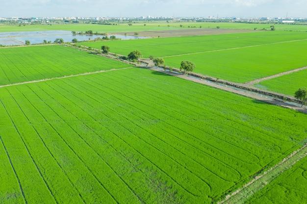 풍경 녹색 패턴 자연과 필드 쌀의 비행 무인 항공기에서 공중보기