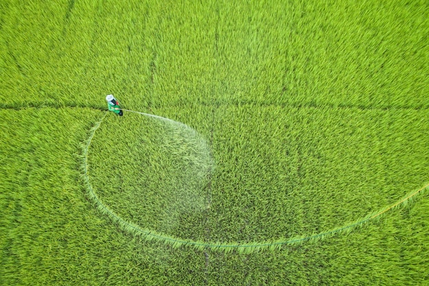 Aerial view from flying drone. thai farmer spraying chemical to young green rice field
