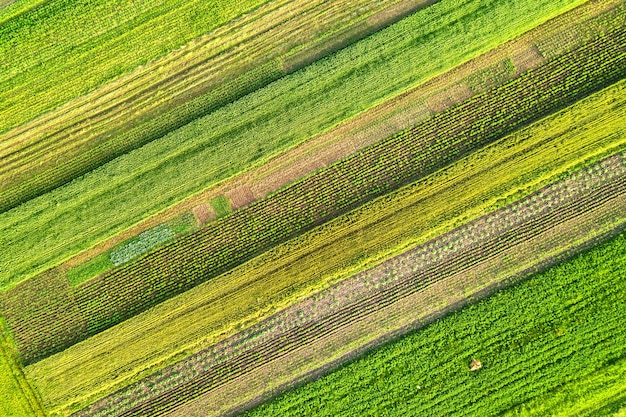 Aerial view of green agricultural fields in spring with fresh vegetation after seeding season