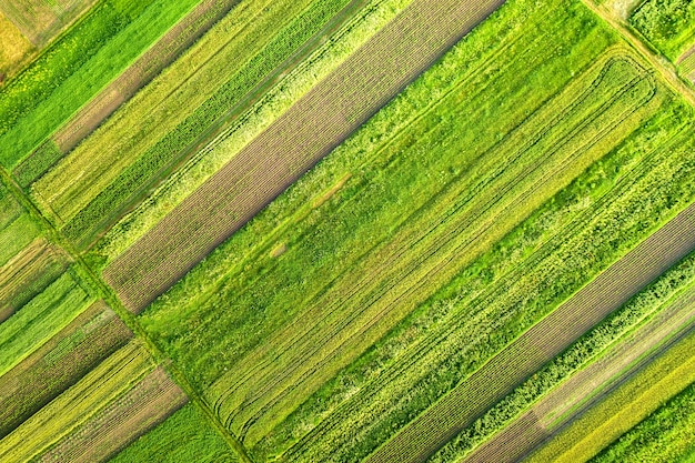Aerial view of green agricultural fields in spring with fresh vegetation