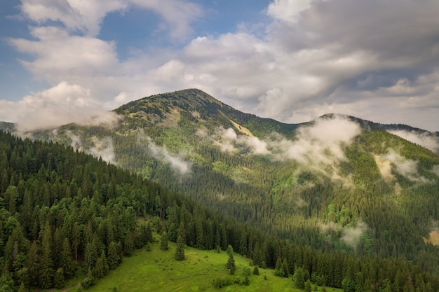 Aerial view of green carpathian mountains covered with evergreen spruce pine foreston summer sunny day.