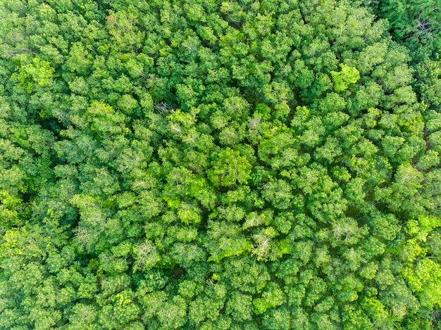 Aerial view of green forest
