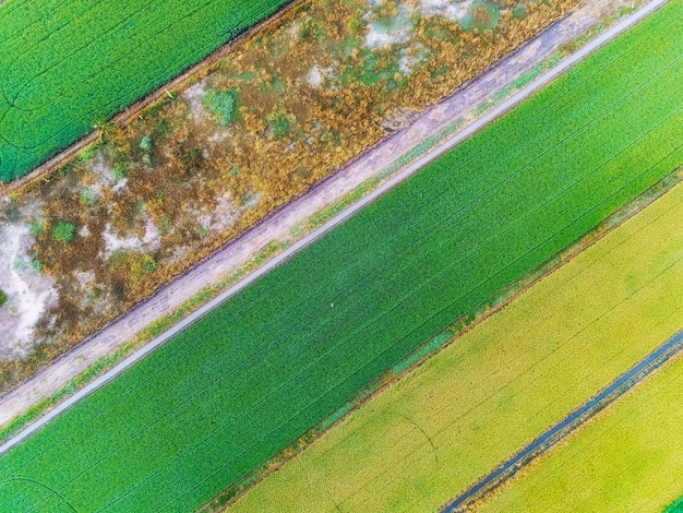 Aerial view of the green rice fields