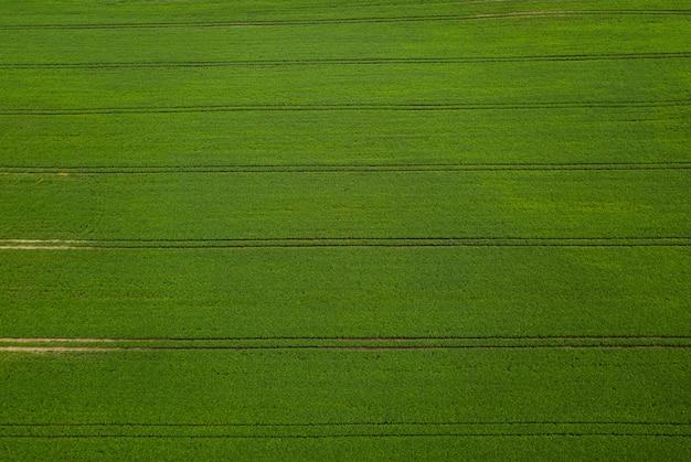 Вид с воздуха зеленое поле сои.