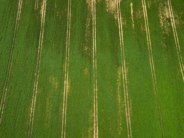Aerial view of green soybean field