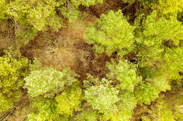 Aerial view of green summer forest with many fresh trees.