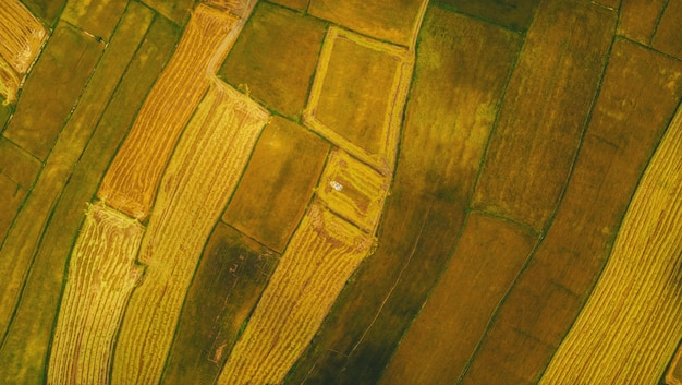 Aerial view of harvested rice fields with a harvester