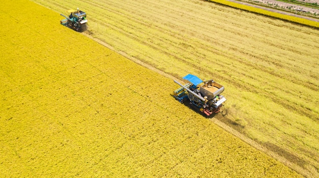 Aerial view of harvester machine working in rice field from above