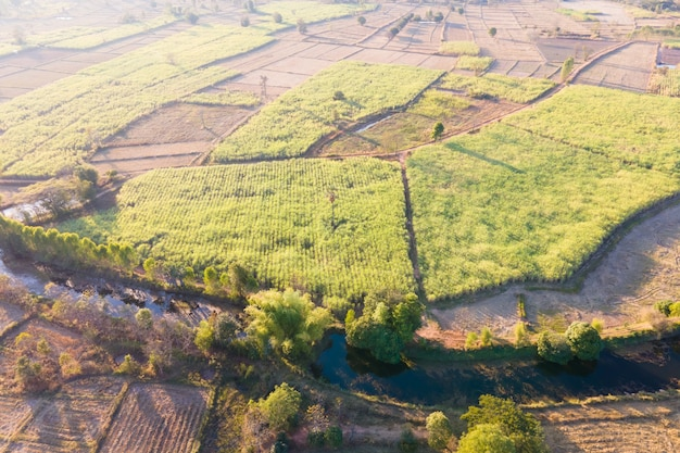 Aerial view high angle view of sugarcane plantation and rice fields