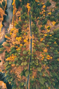 Aerial view of a highway through the colorful wild nature in autumn