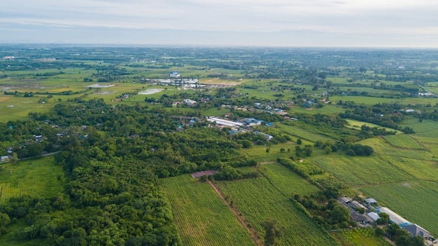 Aerial view of the housing with the typical rice farming or agriculture in rural thailand