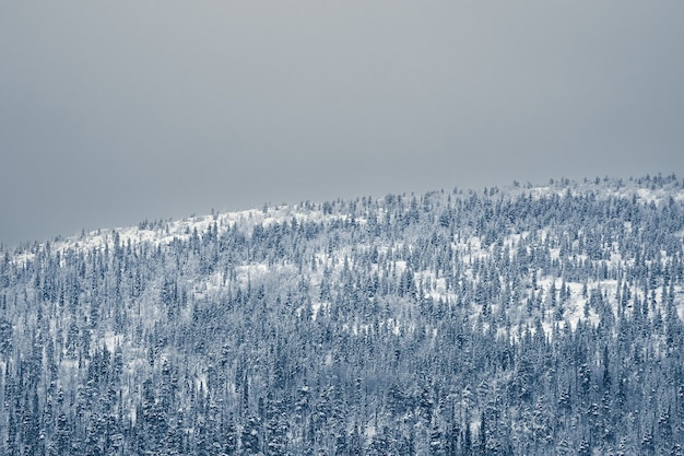 Aerial view of a huge mountain covered with spruce snow-covered forest on a polar night. minimalistic landscape.
