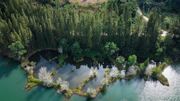 Aerial view of lake and pine forest at liwong public park, chana, songkhla, thailand Premium Photo