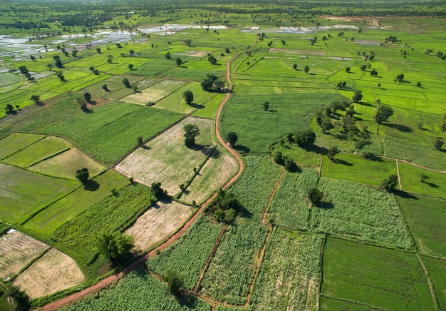 Aerial view of the large green field in spring season nature background.