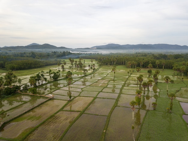 Aerial view newly planted fields