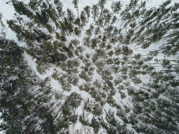 雪に覆われたモミの木と美しい冬の風景の空撮