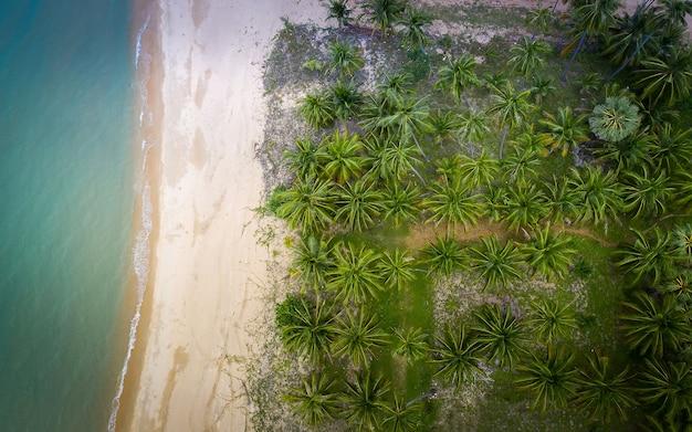 코코넛 야자 나무 농장 패턴과 바다의 공중보기