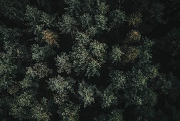 緑の森の空撮