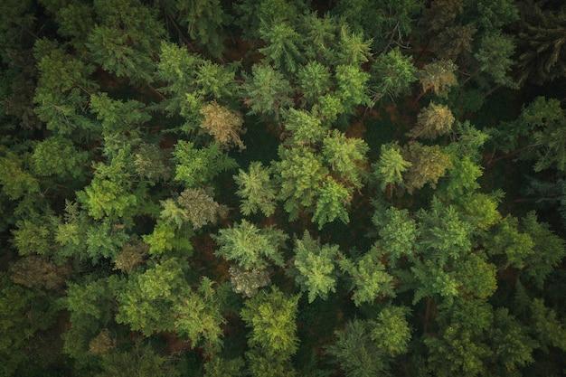 녹지 숲의 항공 보기
