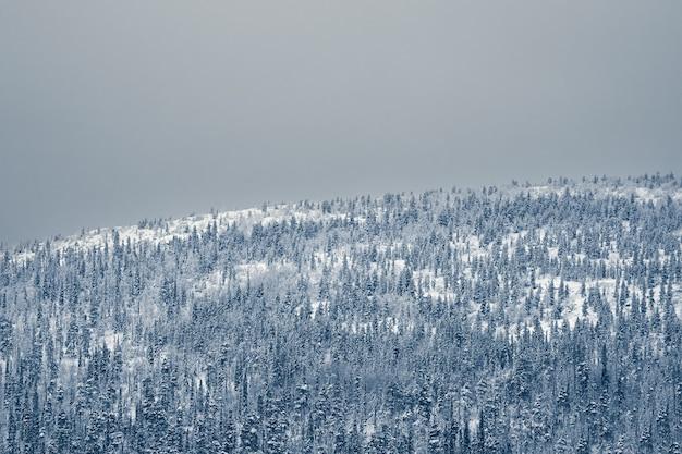 極夜のトウヒの雪に覆われた森に覆われた巨大な山の空撮。ミニマルな風景。