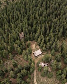松林の空撮。