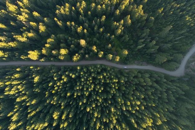 カラフルな木でいっぱいの秋の森の真ん中に道路の空撮