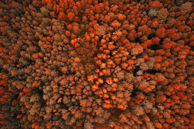 Вид с воздуха на осенний лес с апельсиновыми деревьями.