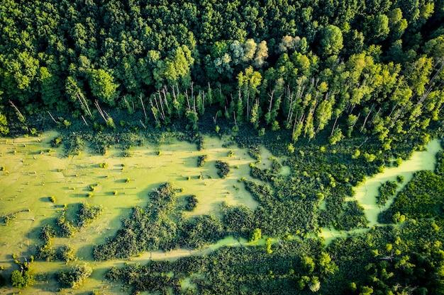 美しい森と牧草地の空撮