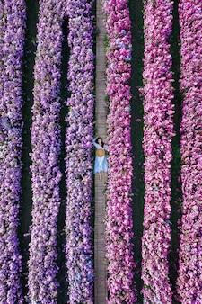 マーガレットの花畑の美しい少女の空撮