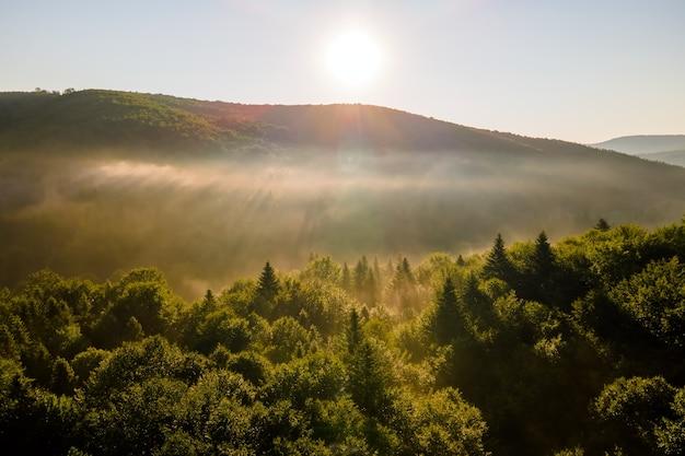 Вид с воздуха ярким туманным утром над темными лесными деревьями на теплом летнем восходе солнца. красивые пейзажи диких лесов на рассвете.