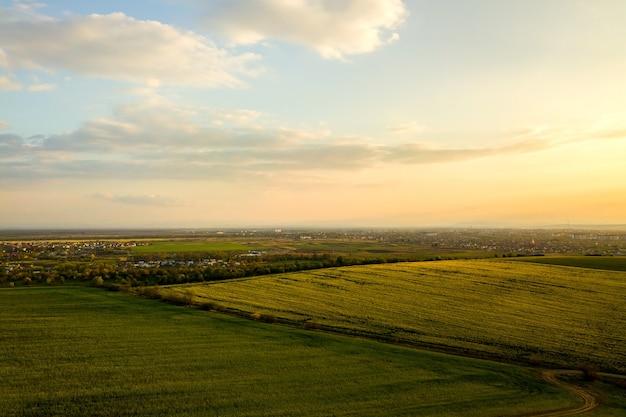 菜種植物が育ち、日没時に田舎の未舗装の道路を横断する明るい緑の農地の空撮。
