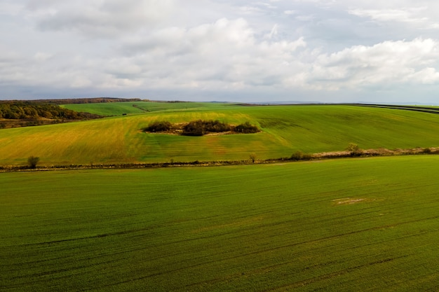 Вид с воздуха на ярко-зеленое сельскохозяйственное поле в начале весны.