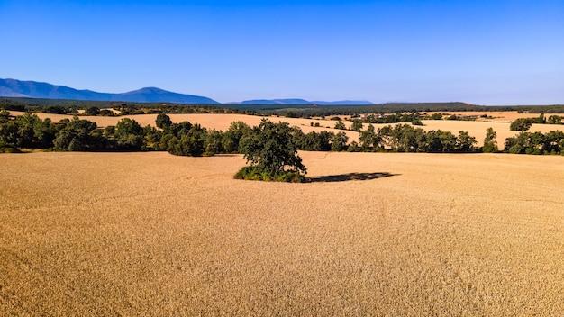 화창한 날과 푸른 하늘에 수확하기 전에 시리얼 밭의 공중 전망. 세고비아.