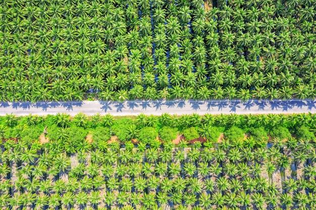 코코넛 야자 나무 농장과 도로의 공중보기.