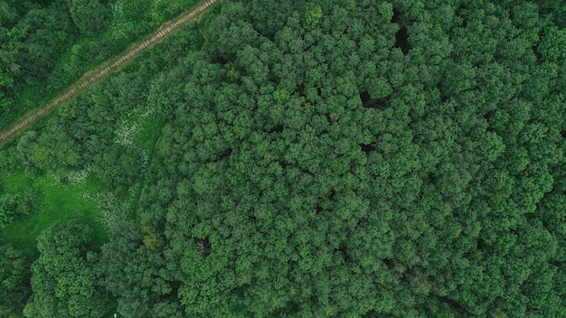 森のある田園地帯の空撮