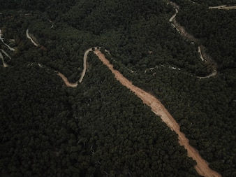 Aerial view of dirt road surrounded by dense forest