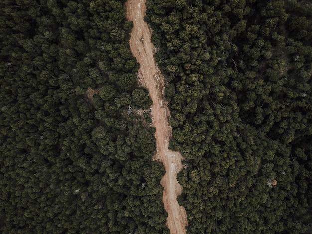 나무에 둘러싸인 비포장 도로의 항공보기