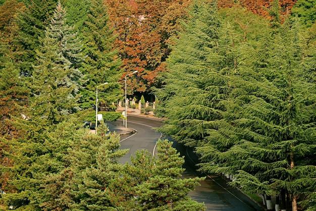 秋の松の葉の間の空の曲がった道路の航空写真