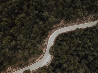 Aerial view of empty road surrounded by green coniferous trees