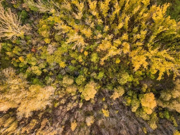 Вид с воздуха на лес осенью с красочными деревьями. фотография с дрона.