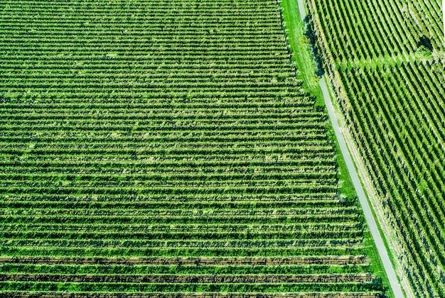 Вид с воздуха на виноградное поле