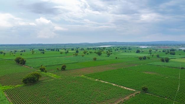 緑の綿畑の空撮