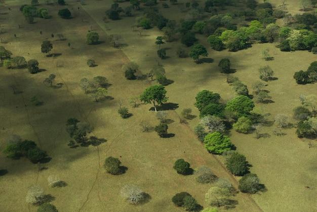 Вид с воздуха на зеленом поле, полном деревьев в бразильских водно-болотных угодьях, известных как пантанал, в штате мату-гросу-ду-сул