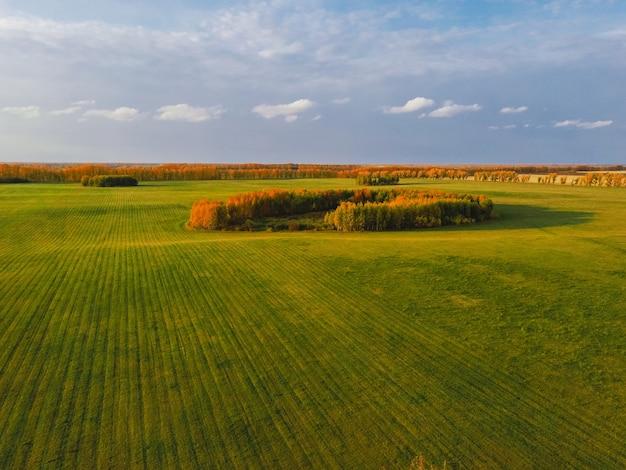 Вид с воздуха на зеленое поле с озимыми культурами с островками желтых осенних деревьев