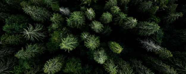 松の木の上の緑のトップの空撮トップパノラマビュー