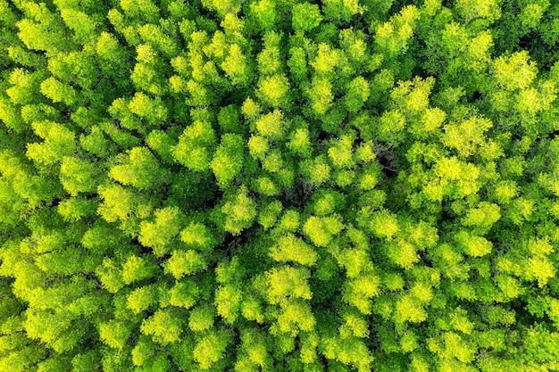 Вид с воздуха на зеленые деревья в лесу.