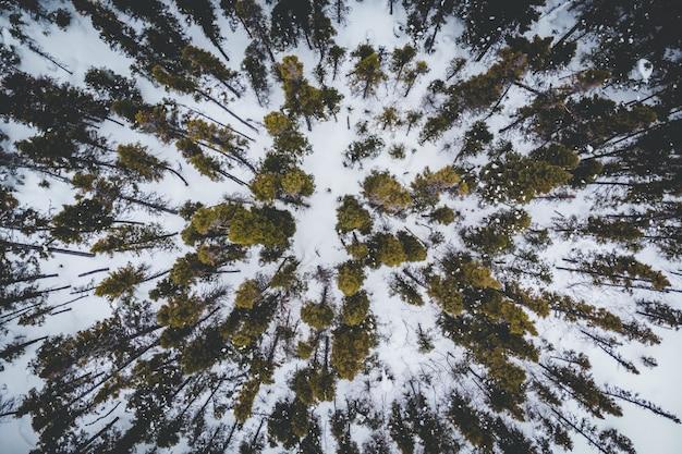 雪に覆われた地面に緑の木々の空撮