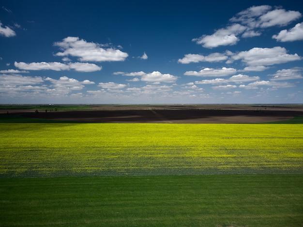 봄철 노란 유채 농경지가 있는 풍경의 공중 전망.