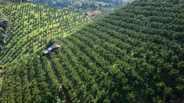 タイ北部チェンマイの山のオレンジ畑と小さな家の空撮