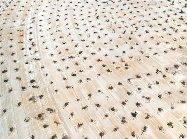 버려진 석회암 채석장에서 조림 작업의 항공 보기